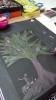 plastyka-drzewa (8)